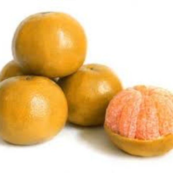 jeruk-medan