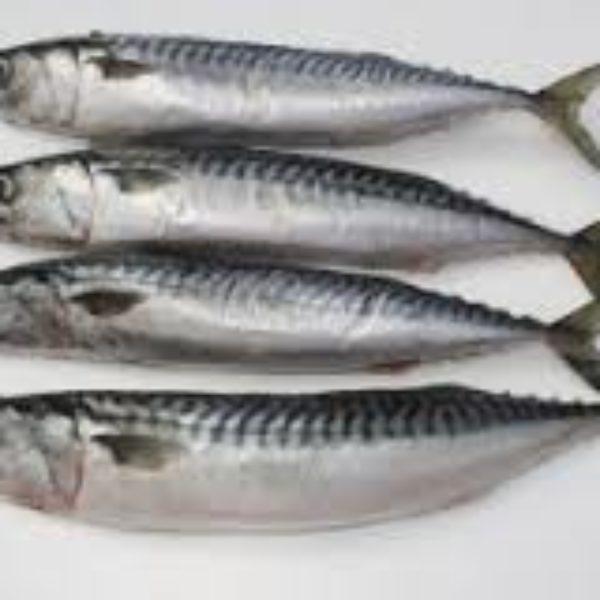 ikan-benggol